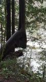 Животное дерево Стоковые Фотографии RF