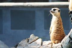 Животное зоопарка Стоковое фото RF
