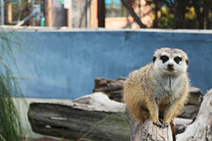 Животное зоопарка Стоковая Фотография RF