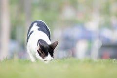 Животное кота Стоковые Изображения