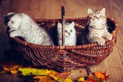 Животное кота babys котенка Стоковые Фото