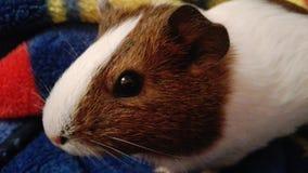 Животное красивое Стоковая Фотография RF
