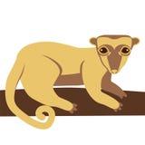 Животное медведя меда Kinkajou Стоковое Изображение