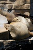 животное море Стоковые Изображения RF