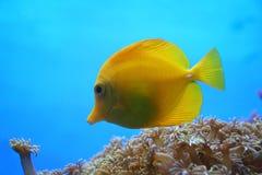 животное море Стоковое Фото