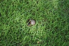 Животное на траве с солнечным светом Стоковое Изображение