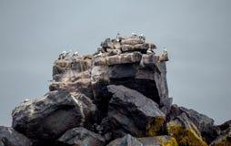 Животное на утесе в море с волной Стоковые Фотографии RF
