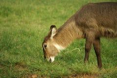 животное одичалое Стоковые Изображения RF