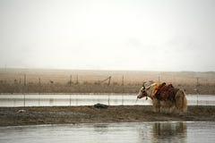Животное около озера Стоковые Изображения