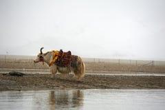 Животное около озера Стоковые Фотографии RF