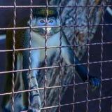 Животное орангутана обезьяны Стоковое фото RF
