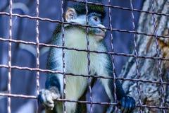 Животное орангутана обезьяны Стоковые Фото