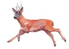 Животное оленей акварели одиночное Стоковые Изображения