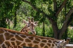 животное одичалое Стоковое Фото
