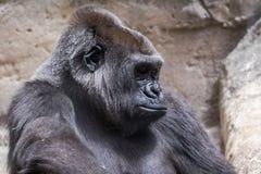животное одичалое Стоковая Фотография RF