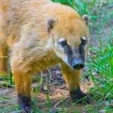 животное одичалое Стоковое фото RF