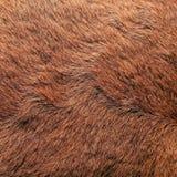 животное пальто Стоковое Изображение