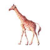 Животное реалистического жирафа акварели тропическое Стоковая Фотография RF