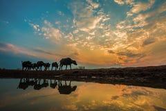 Животное силуэта с освещением захода солнца Стоковые Фото