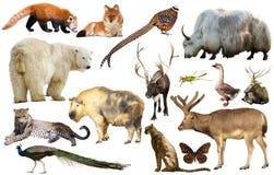 Животное собрание Азия Стоковая Фотография