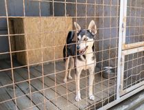 животное укрытие собаки adora Стоковое Фото