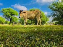 Животное стоковое фото rf