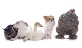 Животное 5 стоковые изображения rf