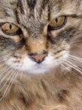 Животное стоковое изображение rf
