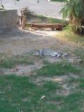 ЖИВОТНОЕ CAT, ЖИЗНЕННЫЙ ПЕРИОД 2 ДО 6 ЛЕТ стоковая фотография