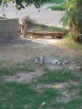 ЖИВОТНОЕ CAT, ЖИЗНЕННЫЙ ПЕРИОД 2 ДО 6 ЛЕТ стоковые фотографии rf