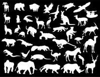 животные белые Стоковая Фотография RF