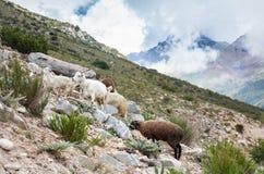 Животные в горах стоковое изображение