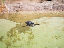 Животные в зоопарке Стоковые Фото