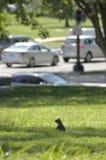 Животные городов Стоковые Фото