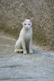 животные детеныши кота Стоковая Фотография