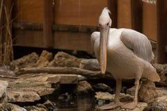 Животные зоопарка в зоопарке Лимасола паркуют, Кипр Стоковое Изображение