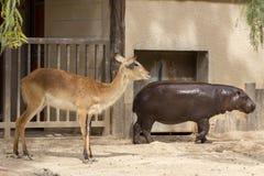 Животные зоопарка в парке зоопарка, Кипре Стоковые Фото