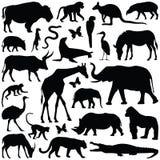 Животные зоопарка Стоковая Фотография