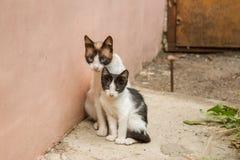 Животные котенка котов кота Стоковое фото RF