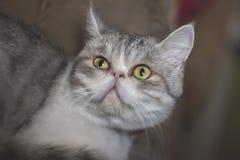 Животные котенка котов кота Стоковые Фотографии RF