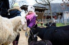 Животные маленького ребенка подавая Стоковые Фото
