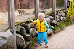 Животные мальчика наблюдая на зоопарке Стоковая Фотография