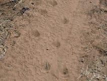 Животные метки Стоковые Фотографии RF