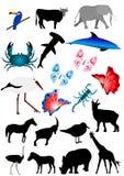 животные много Стоковые Изображения