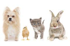 Животные на белой предпосылке стоковые изображения rf