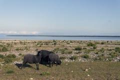 Животные на пляже Стоковое Изображение RF