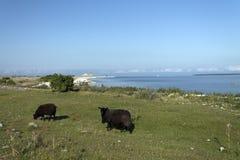 Животные на пляже Стоковая Фотография RF