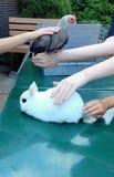 Животные на petting зоопарке Стоковое Изображение RF