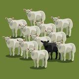 Животные овцы чернят на зеленом цвете, паршивой овце иллюстрация вектора