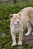 животные одичалые Стоковые Фотографии RF